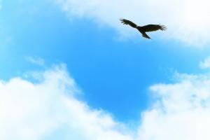 9ブルー空と鳥