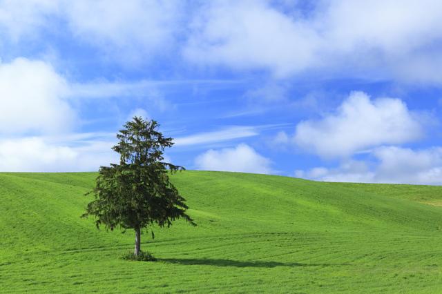 木とグリーン